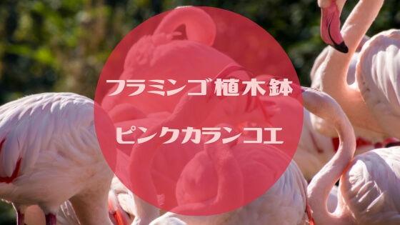 f:id:nakakeboshi:20190415233242j:plain