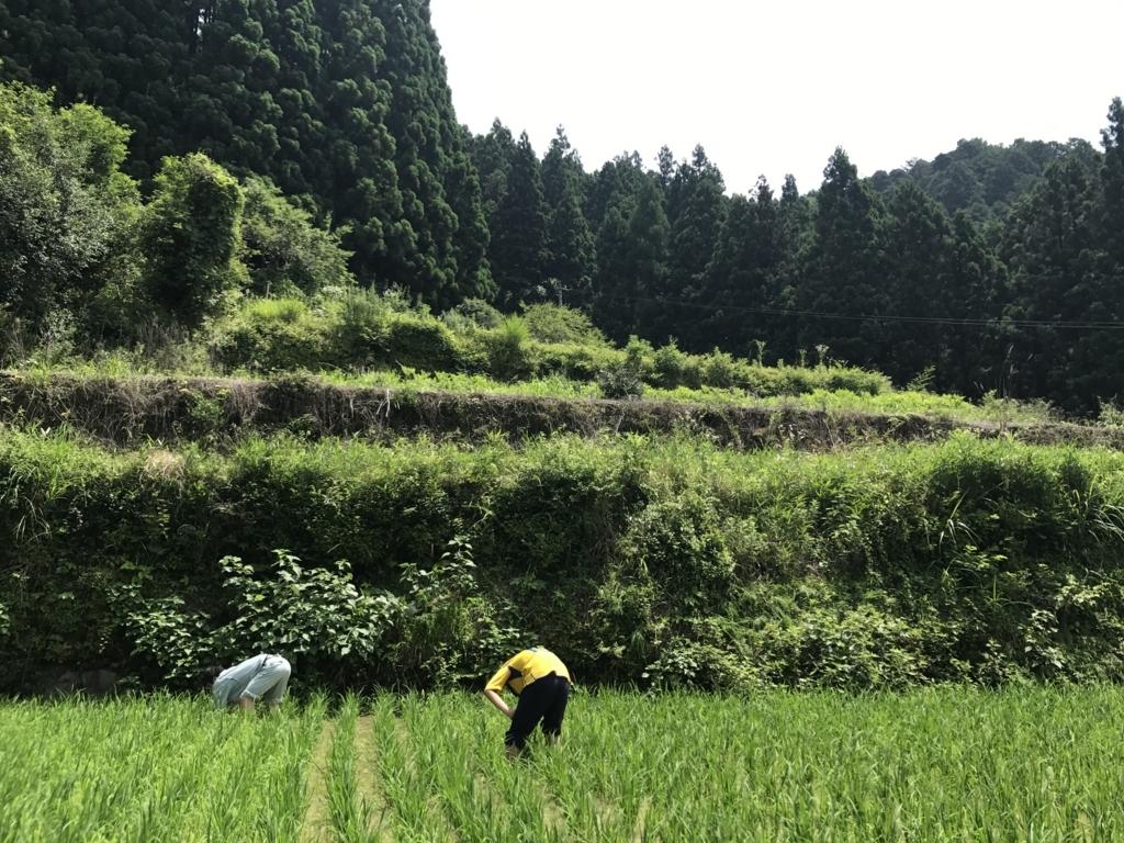 f:id:nakamayuki:20170711211222j:plain
