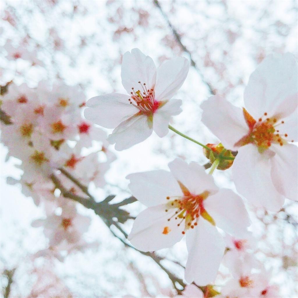 f:id:nakamayuki:20180403112805j:image