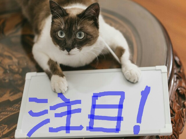 f:id:nakami_midsuki:20170203164706j:plain