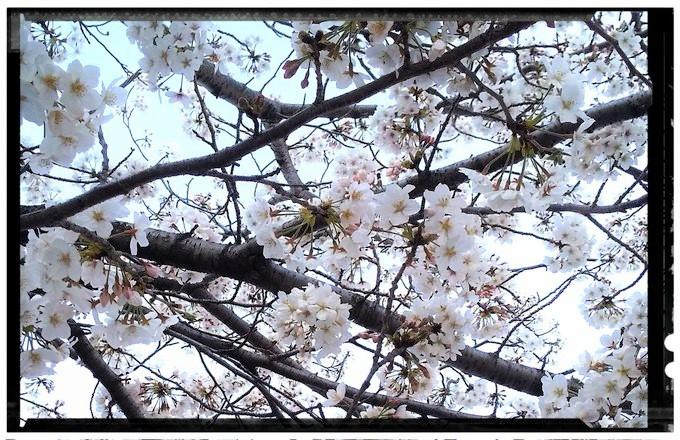 f:id:nakami_midsuki:20200405221019j:plain