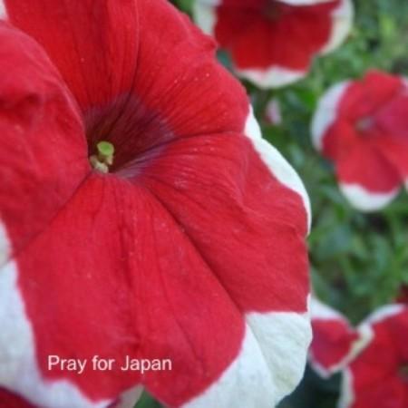 f:id:nakamoto_h:20110312225540j:image