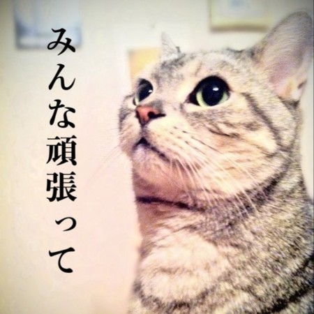 f:id:nakamoto_h:20110313075631j:image
