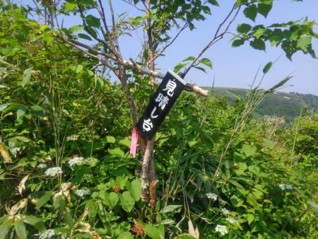 f:id:nakamoto_h:20170706234535j:image