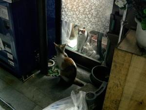 050914猫の家
