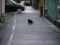 奈良県葛城市。ハードボイルドな猫影