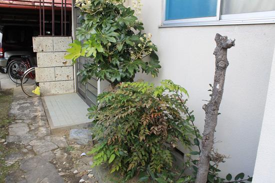 玄関前の木伐採前