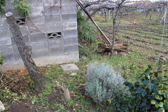 庭の木伐採後