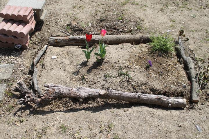 仮状態の花壇