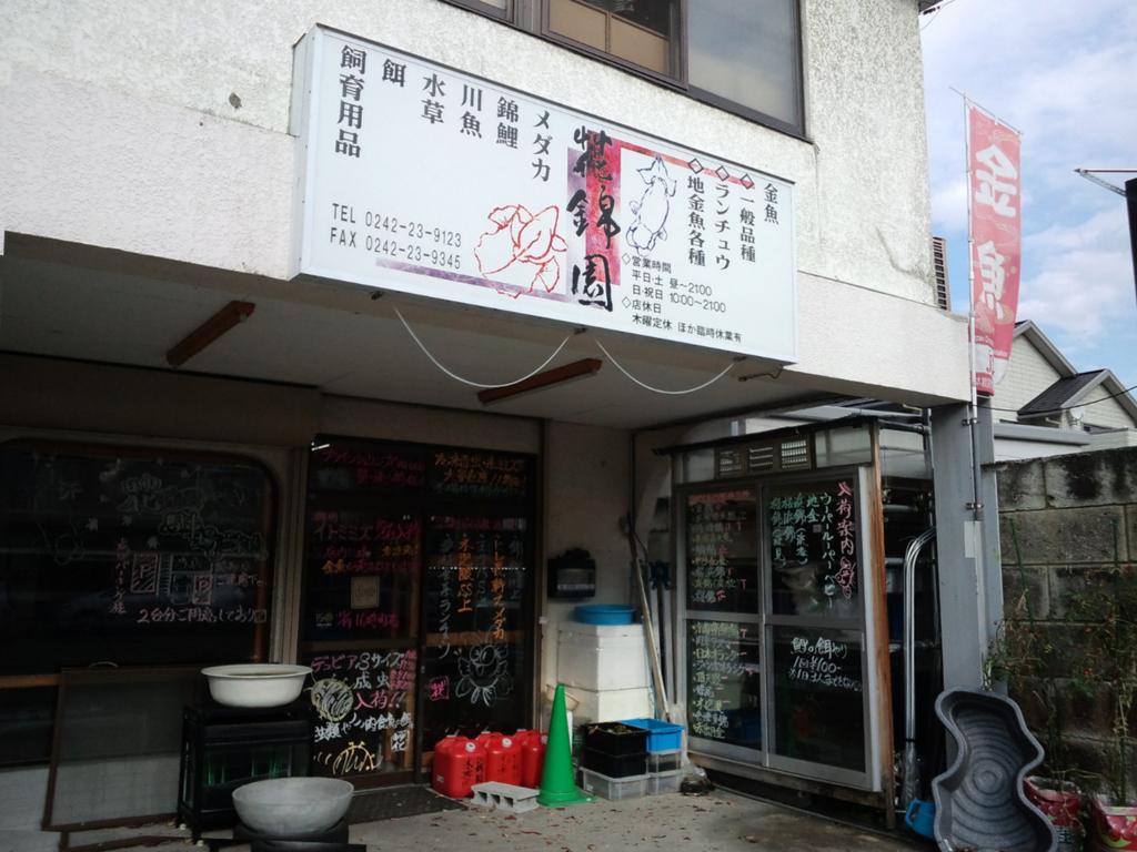 会津の金魚屋さん