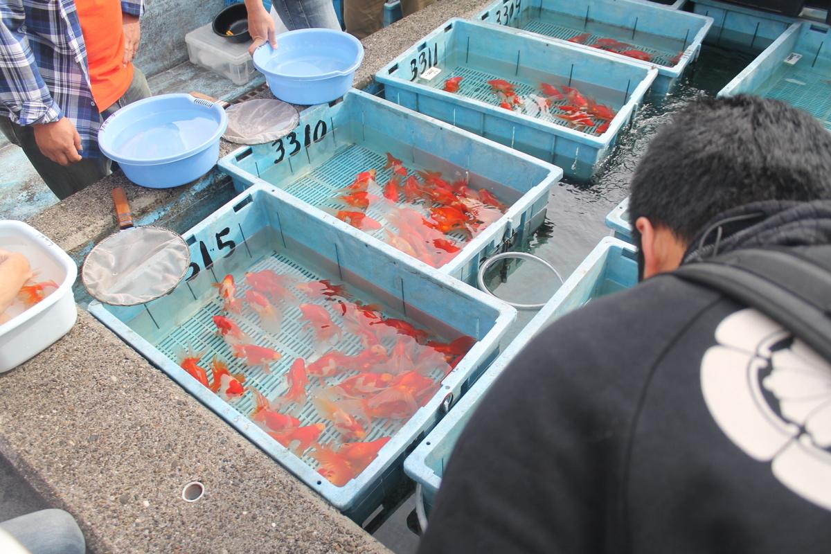 他の養魚場
