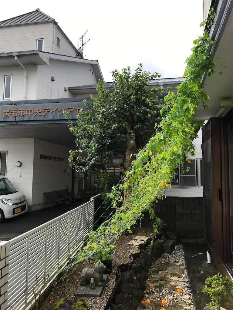 f:id:nakanishi-satoshi:20190815083545j:image