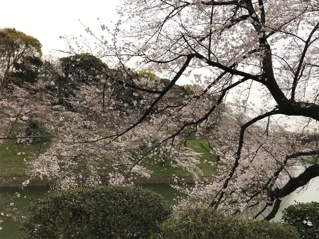 f:id:nakanishi-satoshi:20200323084656j:image