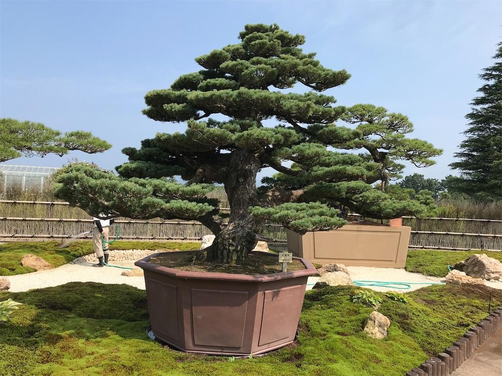 f:id:nakanishi-satoshi:20200806085753j:image