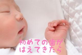 f:id:nakanobushika:20190601081745j:plain