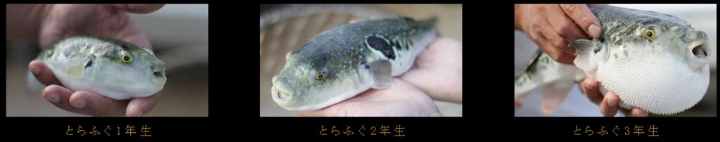 f:id:nakanomaruko:20180104230739p:plain