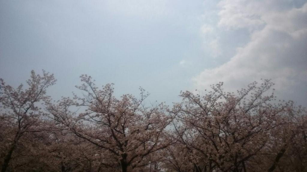 f:id:nakanomaruko:20180402221954j:plain