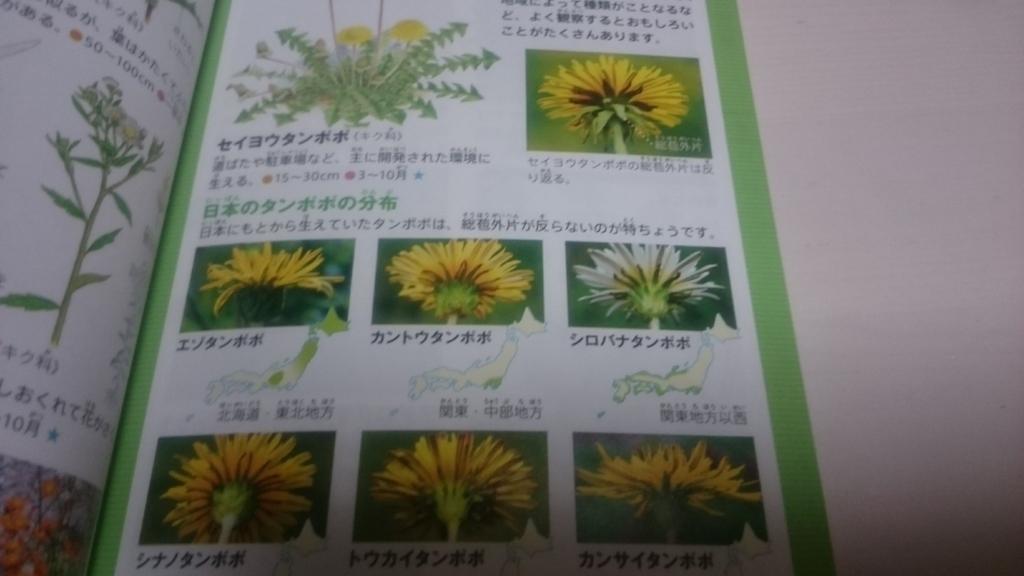 f:id:nakanomaruko:20180429230607j:plain