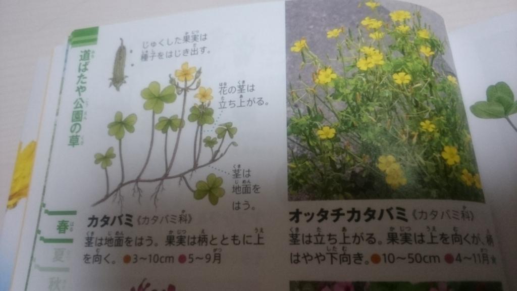 f:id:nakanomaruko:20180429230932j:plain