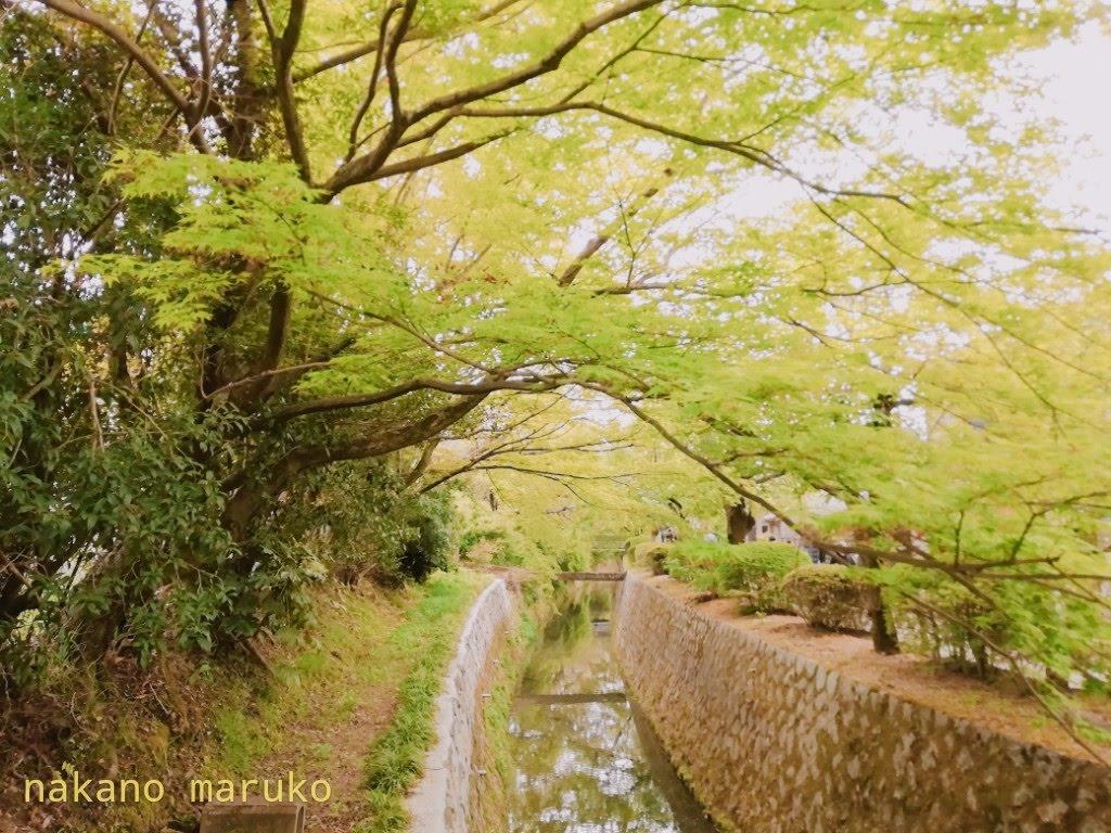 f:id:nakanomaruko:20190423005953j:plain