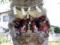 稲荷神社の欅稲荷です
