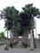 宝珠寺の美しい参道