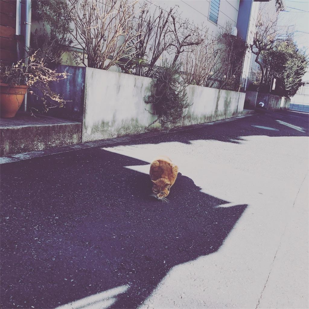 f:id:nakashimaqio:20170126125124j:image