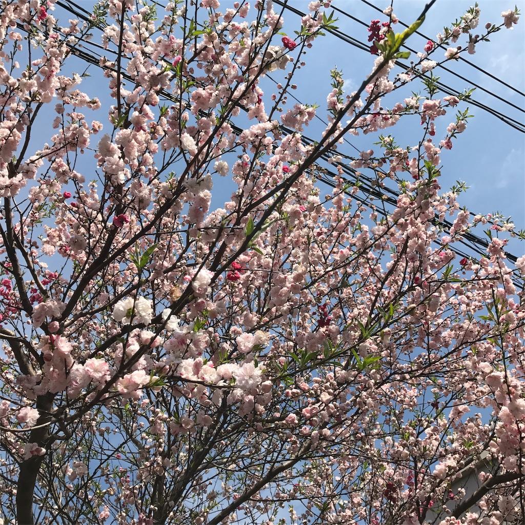 f:id:nakashimaqio:20170403015653j:image