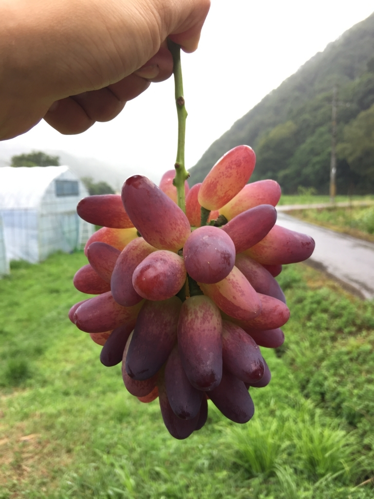 f:id:nakashimato:20170807134747j:plain