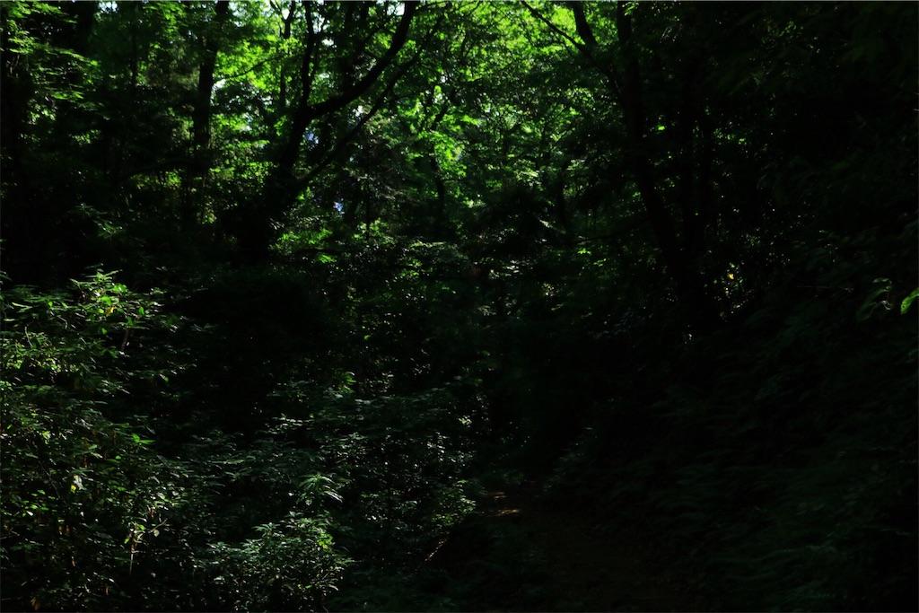 f:id:nakashimayusuke1995:20180602100428j:image