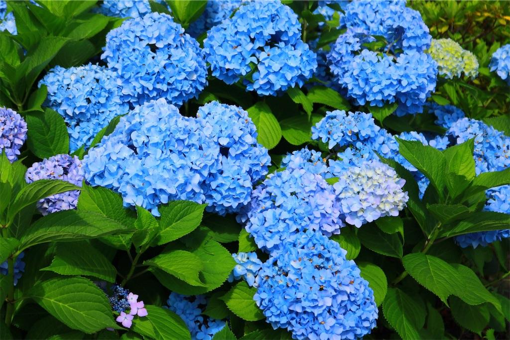 f:id:nakashimayusuke1995:20180615042918j:image