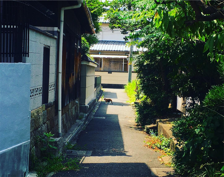 f:id:nakatakaori:20170724214515j:image