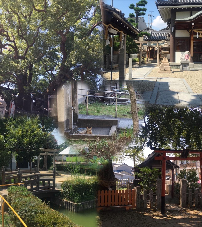 f:id:nakatakaori:20170810161148j:image