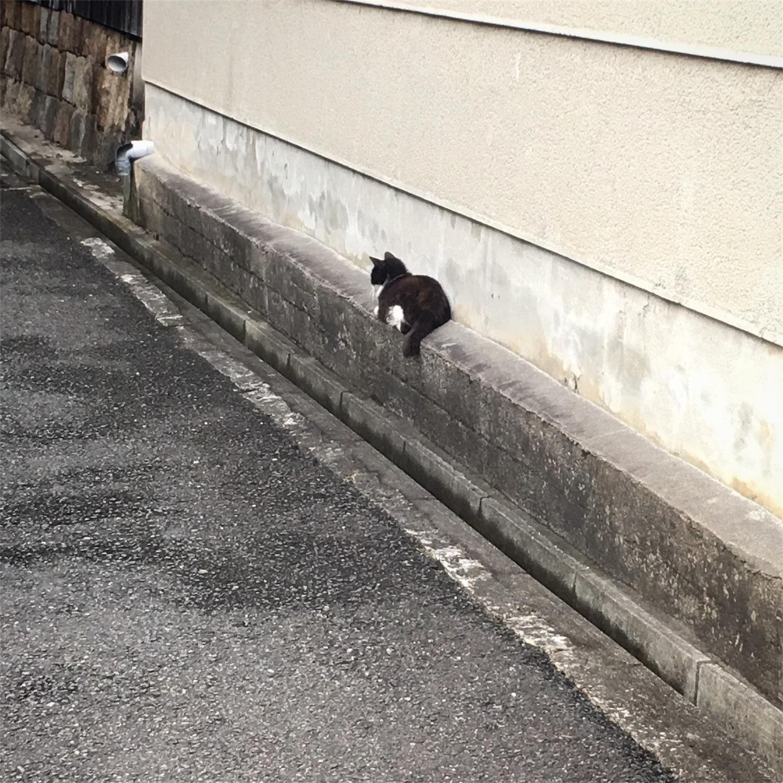 f:id:nakatakaori:20170820202309j:image