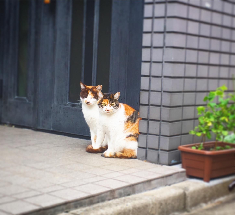 f:id:nakatakaori:20171024105130j:image