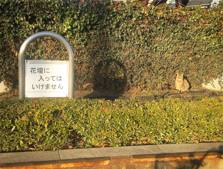 f:id:nakatakaori:20180128201306j:image