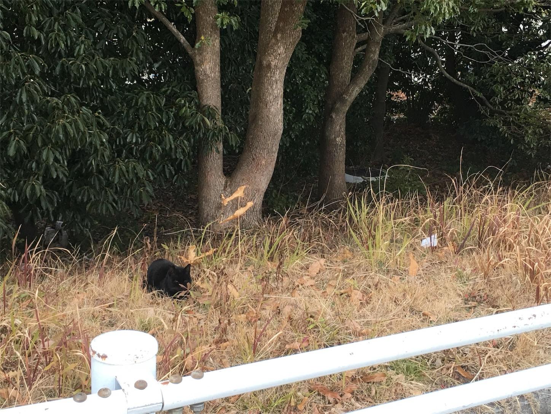 f:id:nakatakaori:20180206034501j:image