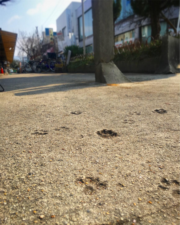 f:id:nakatakaori:20180226165700j:image