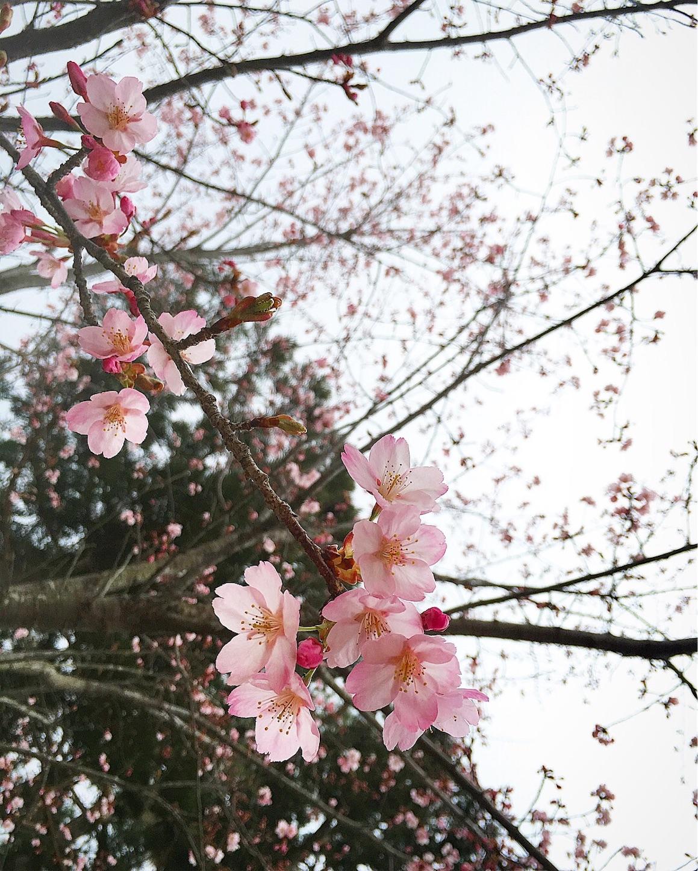 f:id:nakatakaori:20180318231029j:image