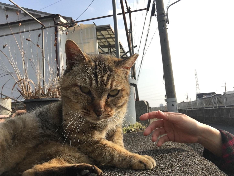 f:id:nakatakaori:20180413163306j:image