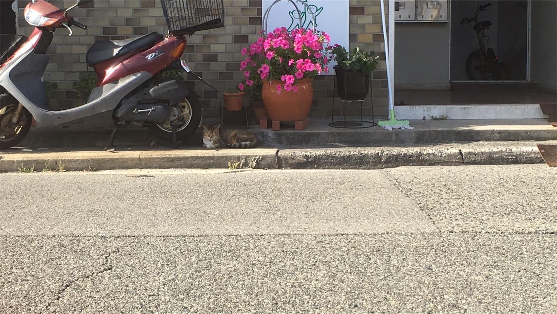 f:id:nakatakaori:20180521131012j:image