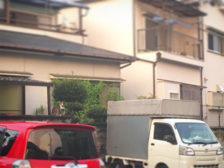 f:id:nakatakaori:20180721005801j:image