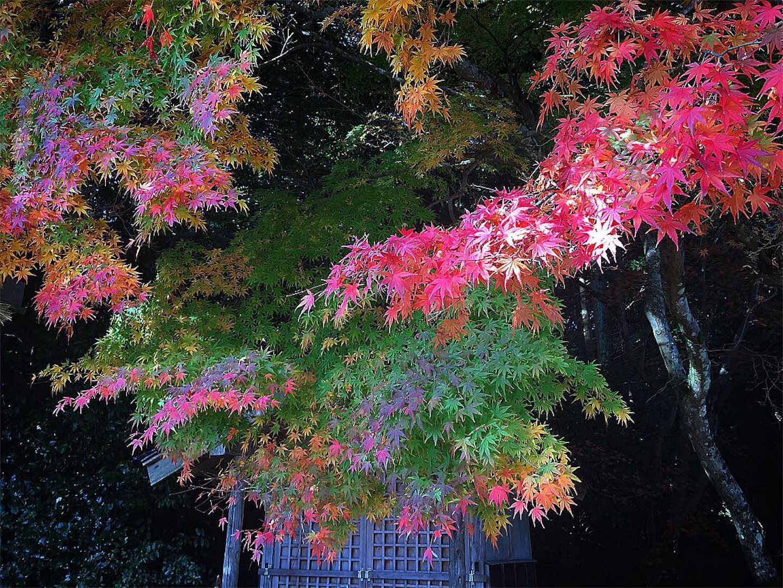 f:id:nakatakaori:20181125203619j:image