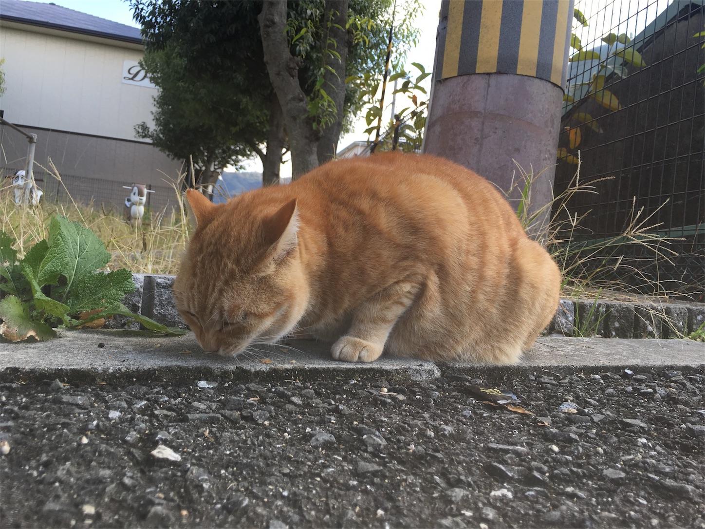 f:id:nakatakaori:20181201231828j:image