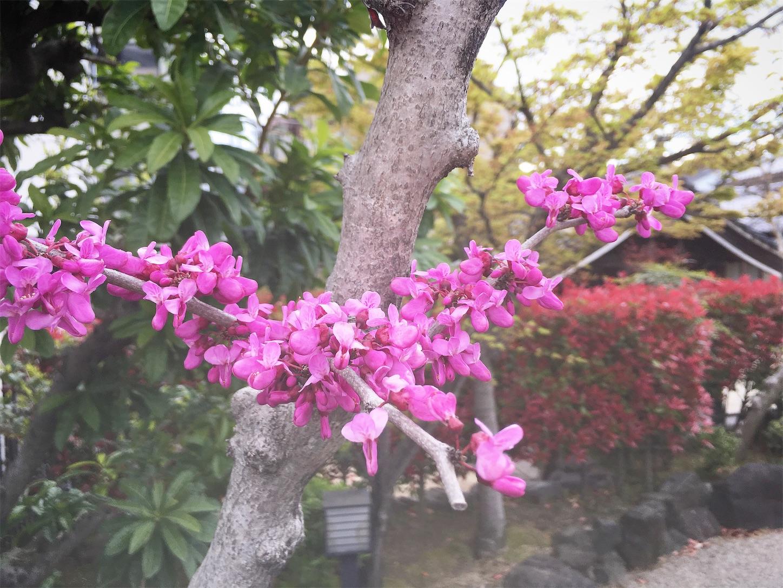 f:id:nakatakaori:20190412213730j:image