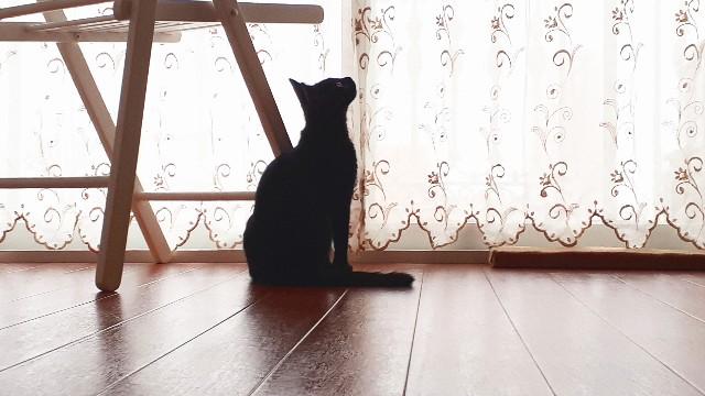 f:id:nakatakaori:20190820110357j:image