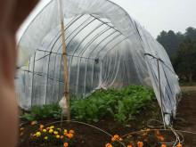 リクガメ菜園1