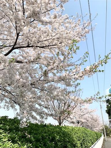 f:id:naki0513:20200406161626j:image