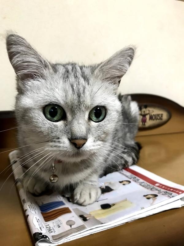 f:id:nakimushi-mama:20210604185414j:plain