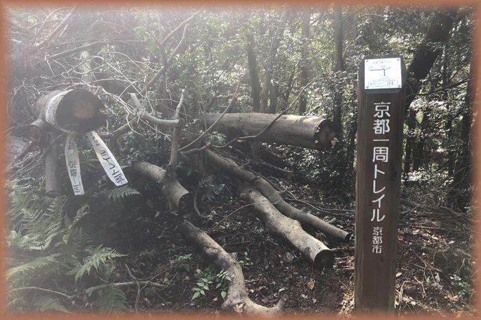 f:id:nakkacho902:20191107122557j:plain